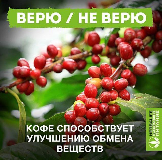 А вы верите? Да, верно! Мы также использовали экстракт кофе для создания Травяного напитка, который не только стимулирует обмен веществ, но и придает тонус. Однако помните, что чрезмерное употребление чистого кофе как горячего напитка может привести к истощению нервных клеток и ухудшению пищеварения.#заботаоглавном #здоровье #похудение #вес #минусразмеры #наука #витамины #нутриенты #энергия #умнаяеда #сбалансированноепитание #здоровыйобразжизни #начнисегодня #smartfood #снижениевеса…