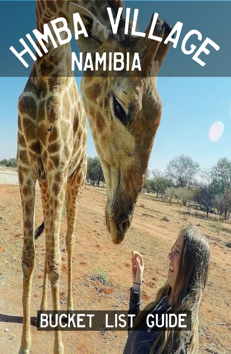 The tame Giraffe in Himba Village, Namibia