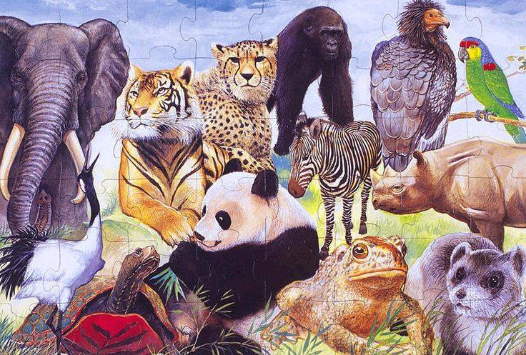 a collage of endangered species in puzzle form