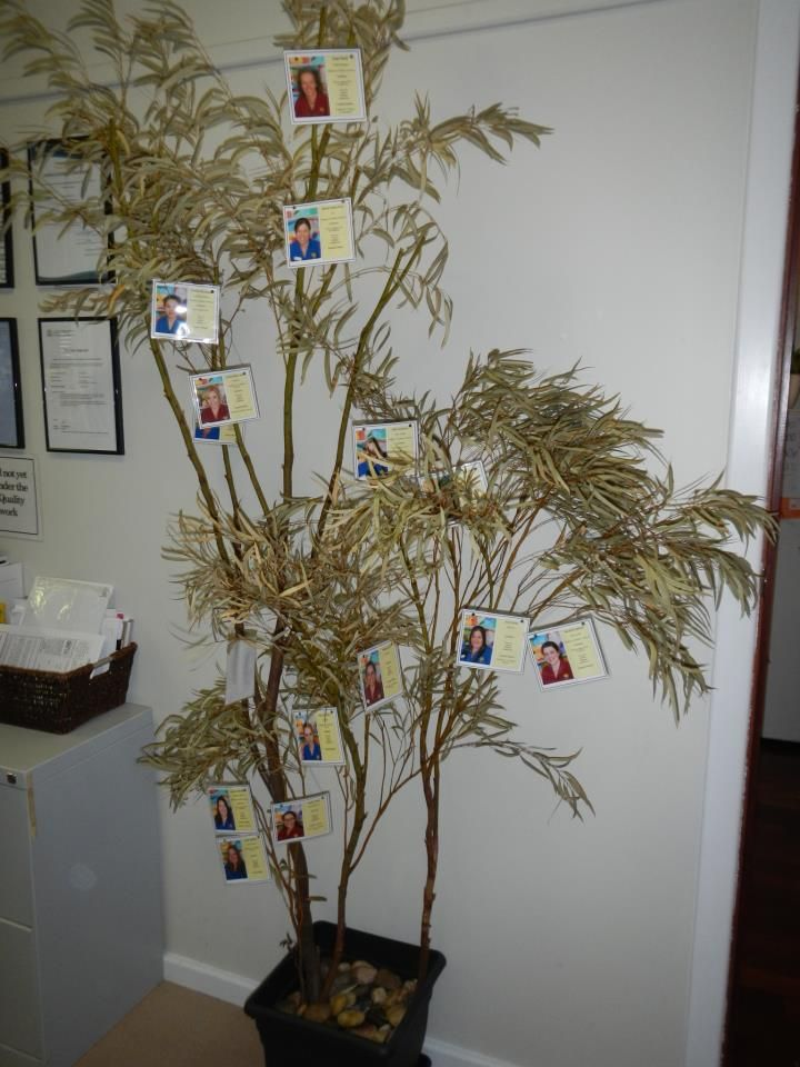 Staff profile tree - Natural Inspired Environments ≈≈