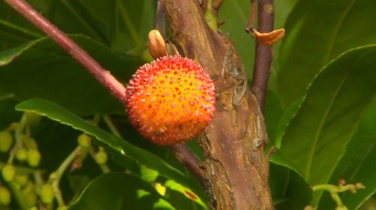 Les 932 meilleures images propos de jardins sur - Comment planter du muguet ...