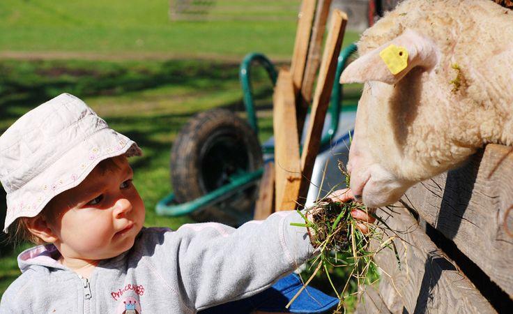 امتى الأطفال ينفع يشوفوا ذبح الأضحية Stock Photo Girl Cute Little Girls Sheep