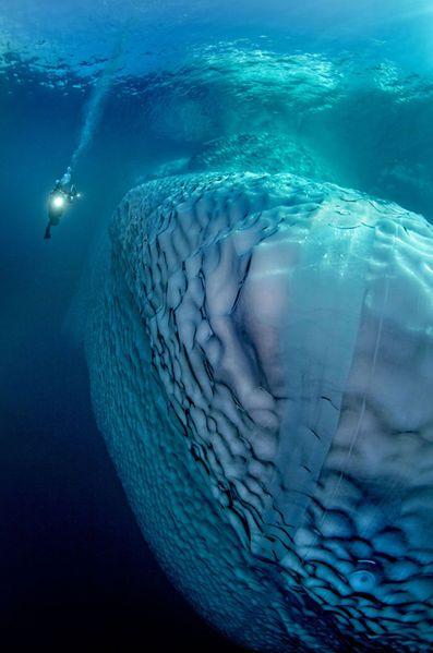 Les plongeurs photographes Tobias Friedrich et Sven Gust ont immortalisé les beautés sous-marines qui se cachent sous les glaces de l'océan arctique.