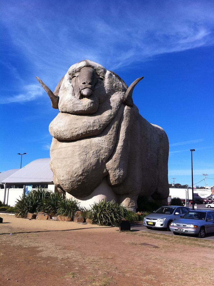 Goulburn, Australia - Big Merino