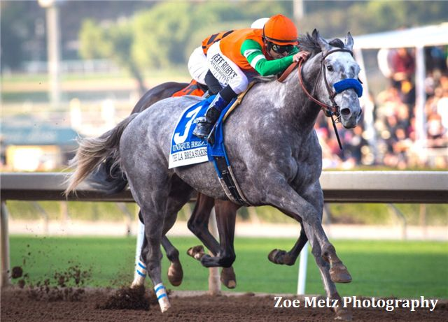 """Eclipse Champion Female Sprinter of 2017 Unique Bella has been firing bullets fornext Saturday'sGrade II, $200,000 Santa Maria Stakes at 1 1/16 miles since winning the Grade I La Brea Stakes lastDec. 26, a victory that no doubt caught the eye of Eclipse Award voters, enabling the gray daughter of Tapit to clinch honors. """"We …"""