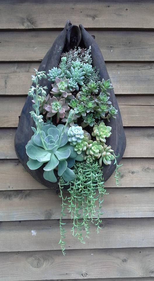 Karen Marable created this nice succulent arrangement in a horsecollar.
