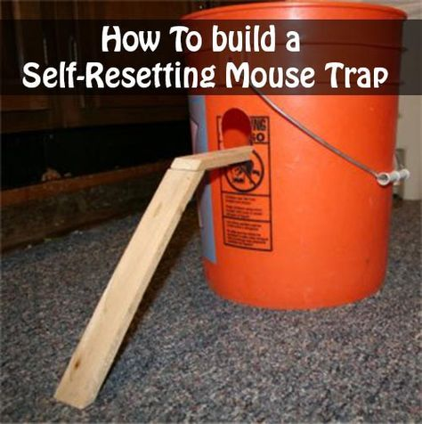 How To build a Self-Resetting Mouse Trap photo: frugal-living-freedom.com The bucket mouse trap catches many mice in a single trap and does not need to be