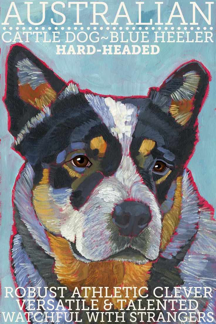 Australian Cattle Dog No. 1  magnets coasters and by ursuladodge, $6.00