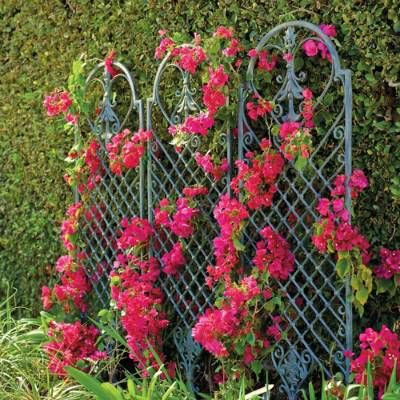 Our versatile Scroll Wall Trellis is an artful display and the perfect support for climbing vines. It functions beautifully against a wall, positioned as a freestanding divider, or planted into an oversized container. The powdercoated cast-aluminum body features scrolling blossoms and leaf details Dark bronze finish with gold highlights Integrated stakes measure 8-3/4 Mi...