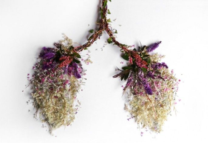 sculptures organes humains en vegetaux poumons   Sculptures dorganes humains en végétaux   vegetal Sculpture photo organe image Camila Carlo...