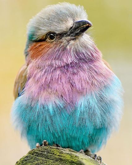 Beautiful animals you can't stop yourself from staring at