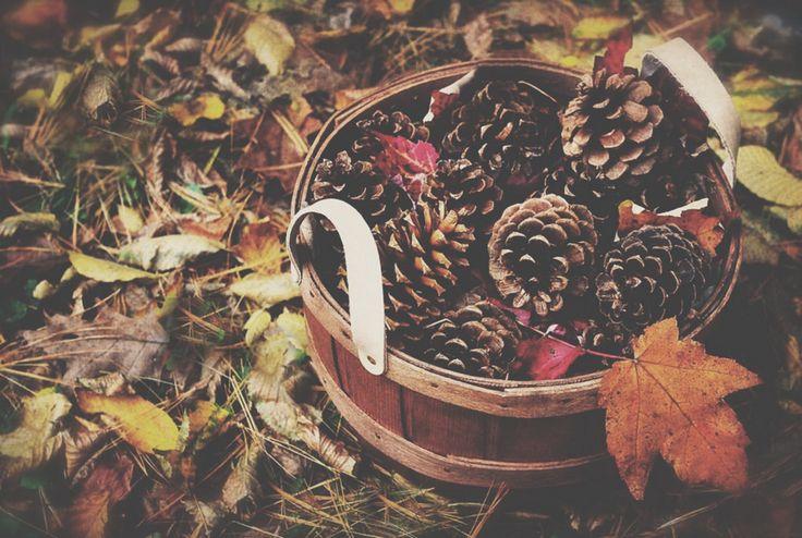 pezzetti di autunno