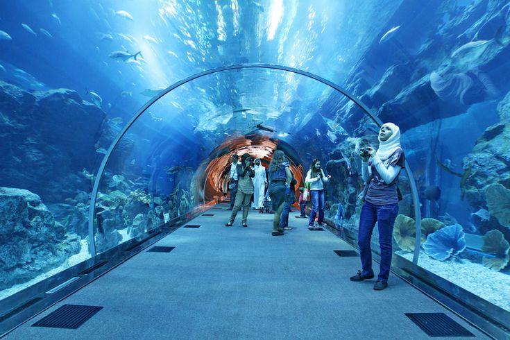 Explore World's largest Aquarium in Dubai http://goo.gl/cMt0rs