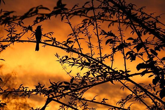 A beautiful bendigo sunset