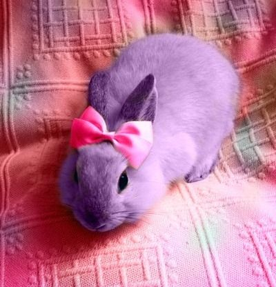 bunny almost looks violet, with a lovely pink bow :)