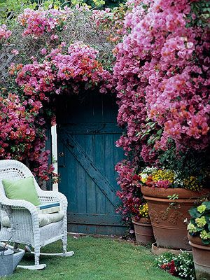 Bougainvillea...very tempted to grow this on my apartment balcony...so beautiful and whimsical, all at the same time.
