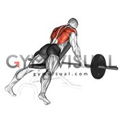 Barbell Reverse Grip Incline Bench Row Ejercicios Musculares