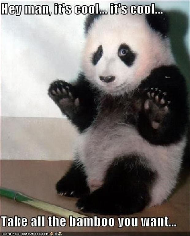animal pictures   funny-animal-pictures-panda-bears-megalawlzdotcom - MegaLawlz. with ...