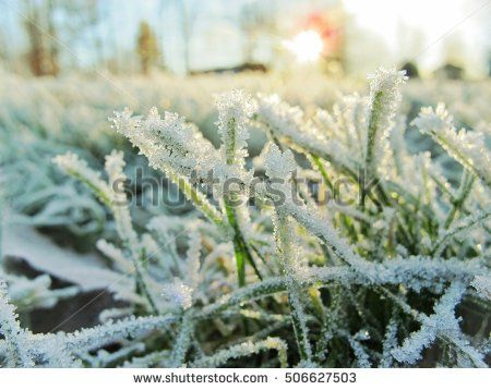 sunny #winter #landscape with the #snow and #ice crystals on th grass