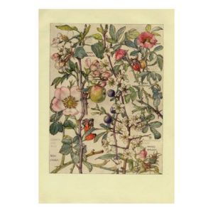 Crab Apples Hand Finished Chromolithograph Print