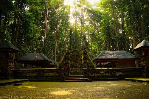 Sangeh Temple. Monkey forest. Bali