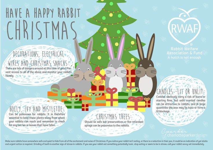 Have a happy rabbit Christmas