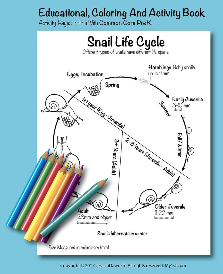 Snail Life Cycle My1st Com Coloring Page Fun And