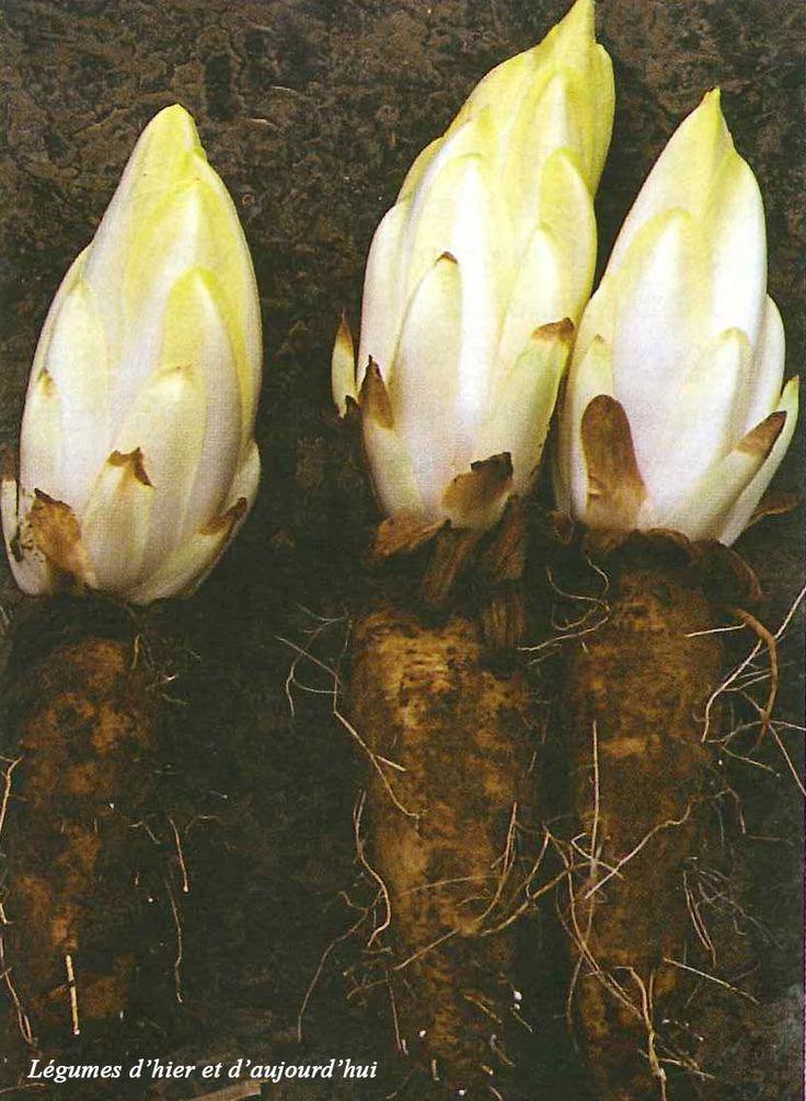On sait tous à quoi ressemble une asperge, un ananas ou un artichaut… Mais en avez-vous déjà vu pousser? Avant d'être récoltés, certains fruits ou légumes peuvent pousser de façon su...