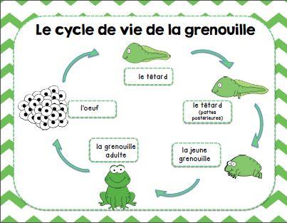 Ensemble d'activités sur les animaux/ French animals activity bundle