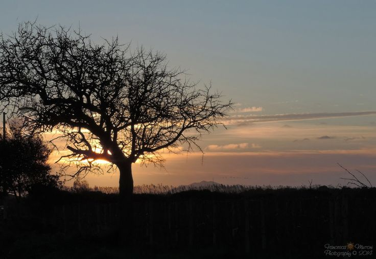 Wild pear tree at the sunset by Francesca Murroni Ph on 500px