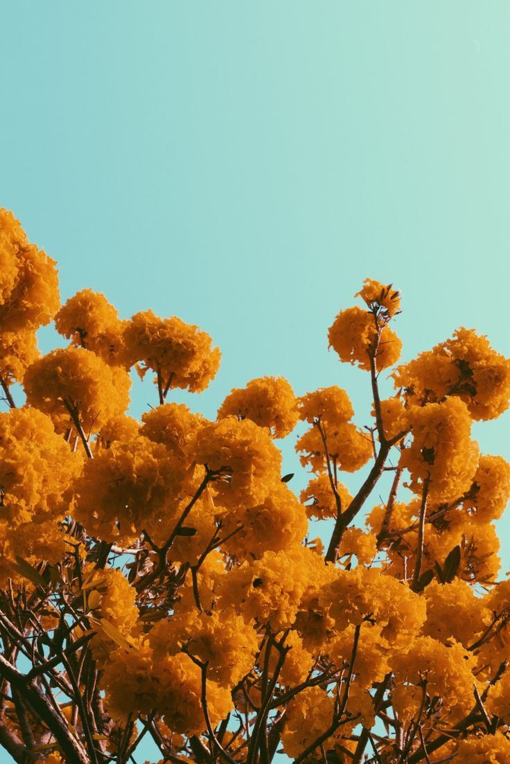 Orange flowers and the sky on a sunny day. I use VSCO filter on this photograph …