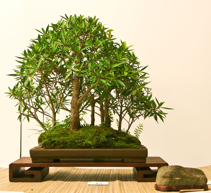 Essay about bamboo tree
