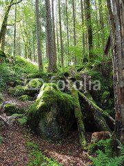 Zauberwald; Hintersee; Ramsau; Geotop