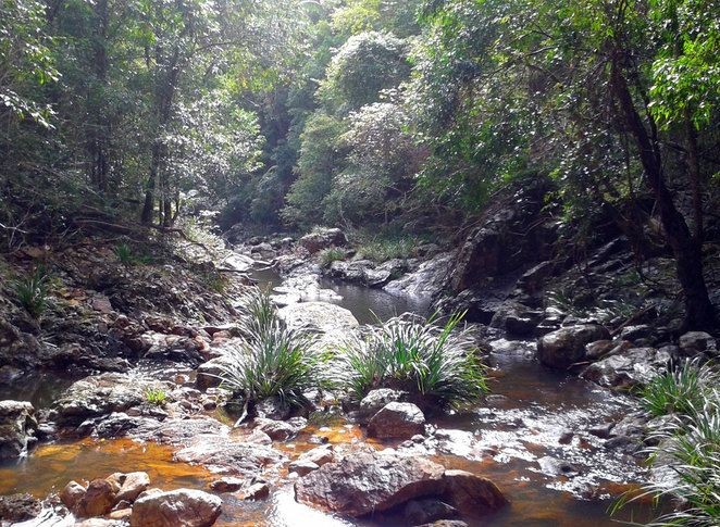 Gheerulla Creek, Mapleton National Park, Sunshine Coast