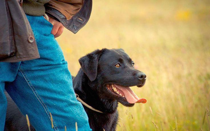 Дрессировка собак в домашних условиях: секреты успеха