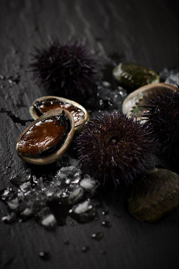Abalone and Sea Urchin