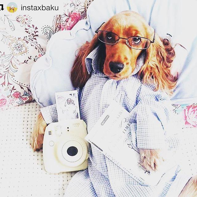 Wir wünschen Euch einen gemütlichen Sonntagabend! #analogefotografie #hundemüde #hundewelt #hund🐶 #instaxmini8 #pyjama #gemütlicher #sonntagabend #kuschelzeit #kuschelnmitdemhund #kuscheln