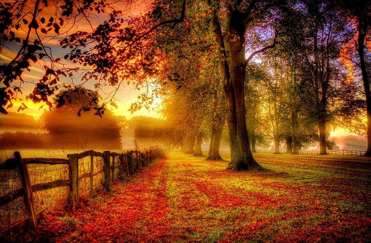 Осень - как горячий ужин, когда с аппетитом съедается все, на что утром спросонок и смотреть не хотелось. Харпер Ли «Пойди поставь сторожа»