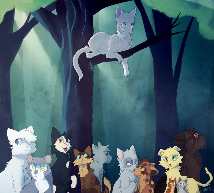 Warriors Dawn Of The Clans List: 1491 Best Warrior Cats Images On Pinterest