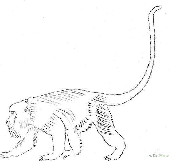 Draw A Howler Monkey Step 6