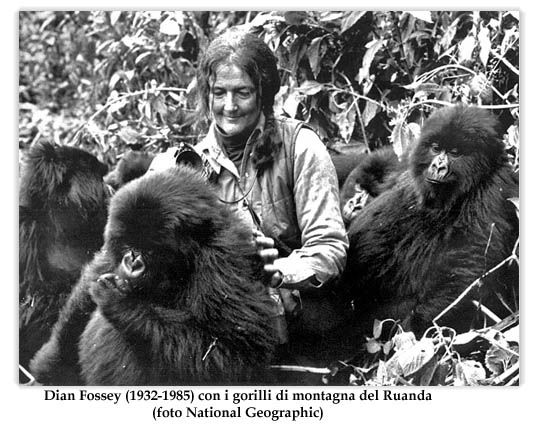 dian fossey lived with the gorillas for thirteen years One of the most important books ever written about our connection to the natural world, gorillas in the mist is the riveting account of dian fossey's thirteen years in a remote african rain forest with the greatest of the great apes.