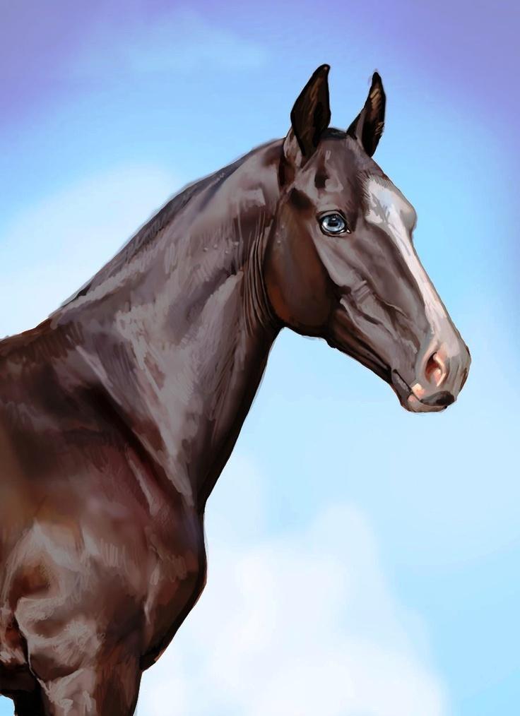 68 besten akhal teke horses bilder auf pinterest pferderassen sch ne pferde und sweetie belle. Black Bedroom Furniture Sets. Home Design Ideas
