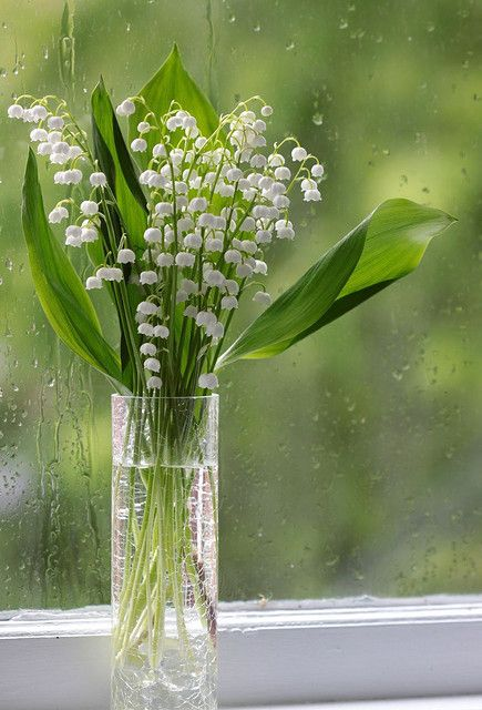 simply lily of the valley