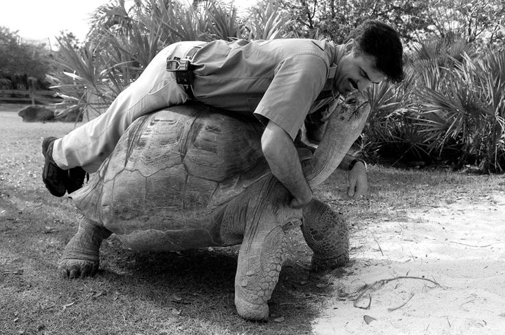 tortoise ride b&w.jpg