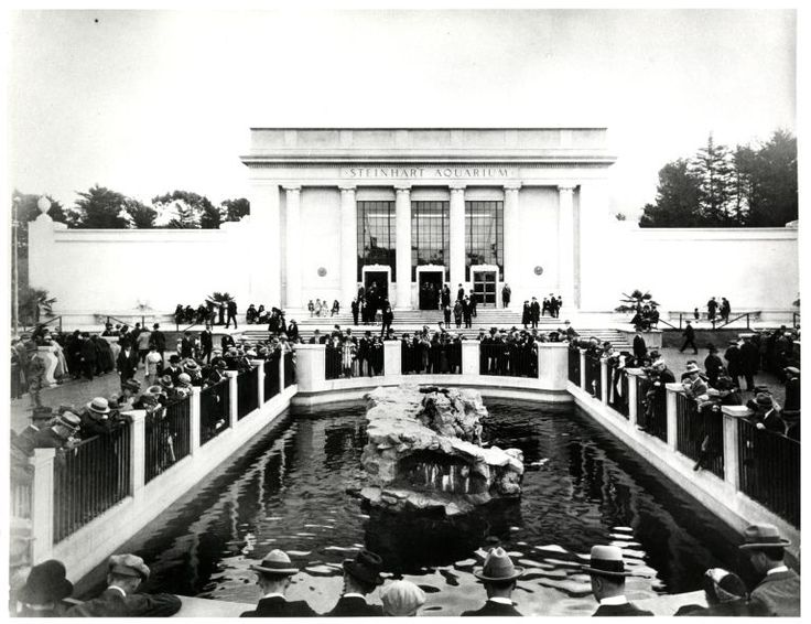 1000 Images About Steinhart Aquarium 90th Anniversary