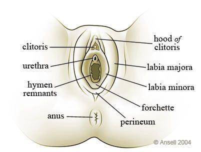 Opinion you female erogenous zones diagram