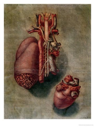 Anatomy of the Visceras, dissected, painted and engraved by Jacques Fabien Gautier d'Agoty.