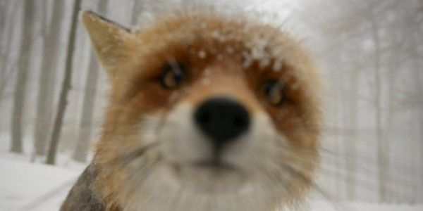 Quick links to share the petition: Stop Fox Hunting   Yousign.org