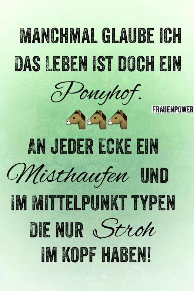 Ponyhof                                                                                                                                                                                 Mehr