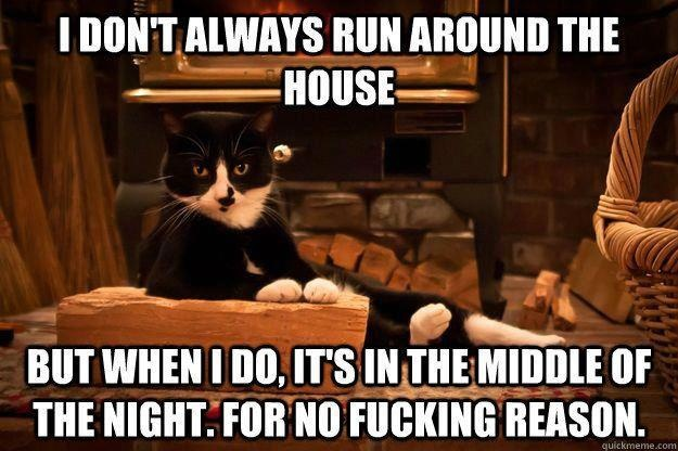 Everyone who has ever been blessed with a cat understands this one.  <3